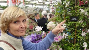 Laura points to Caroline's 2016 Chelsea Challenge - Clematis 'Princess Kate'