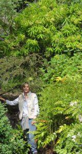 E. Mellifera in Islay dwarfing Laura