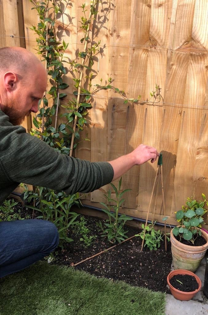 Sweetpeas - planting out