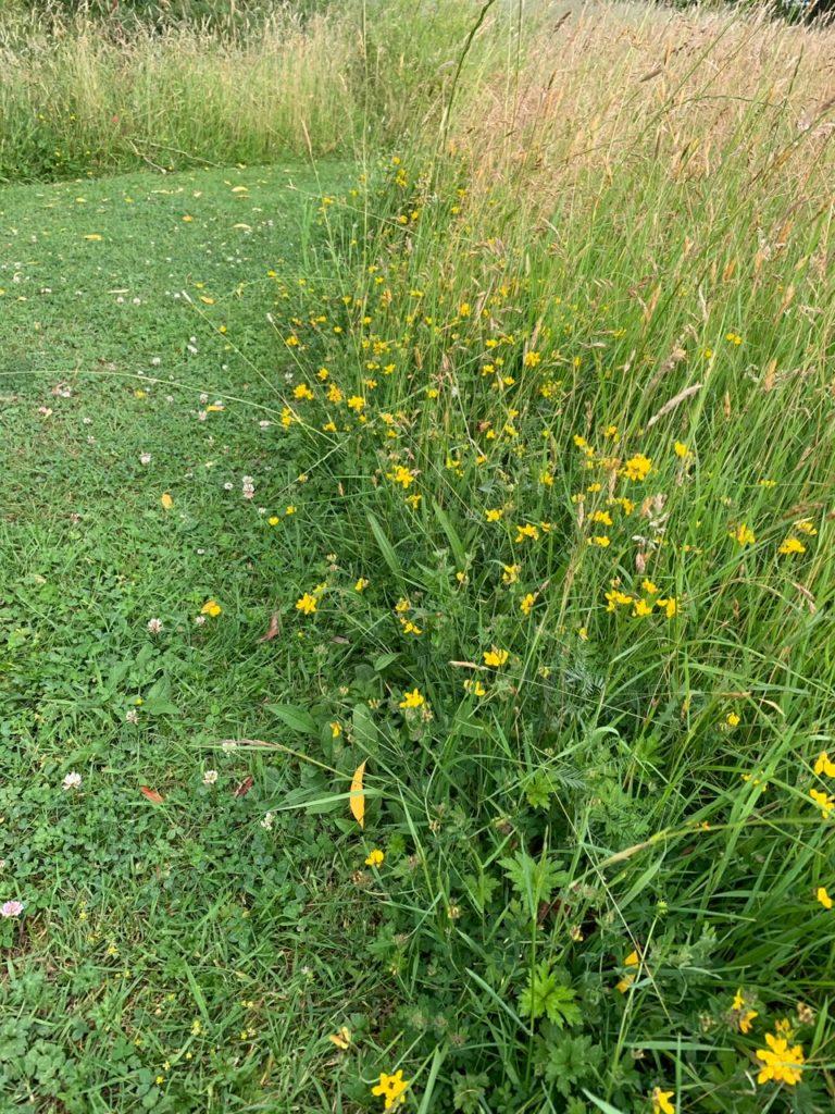 Unmown grass