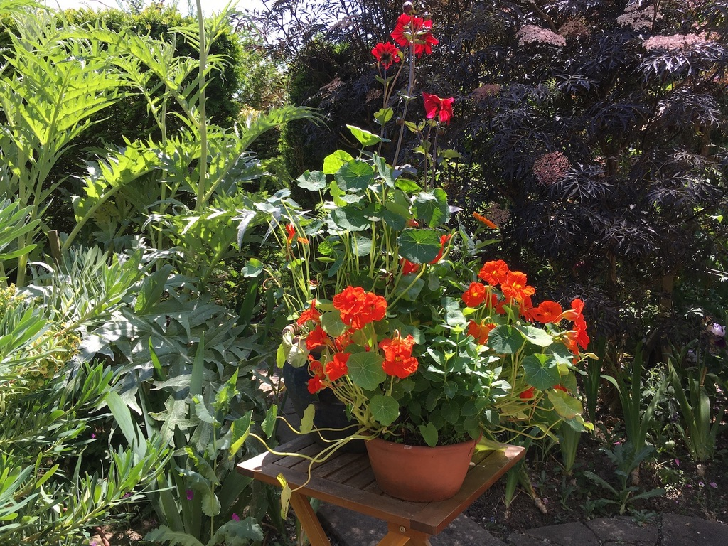 Pots of summer flowers