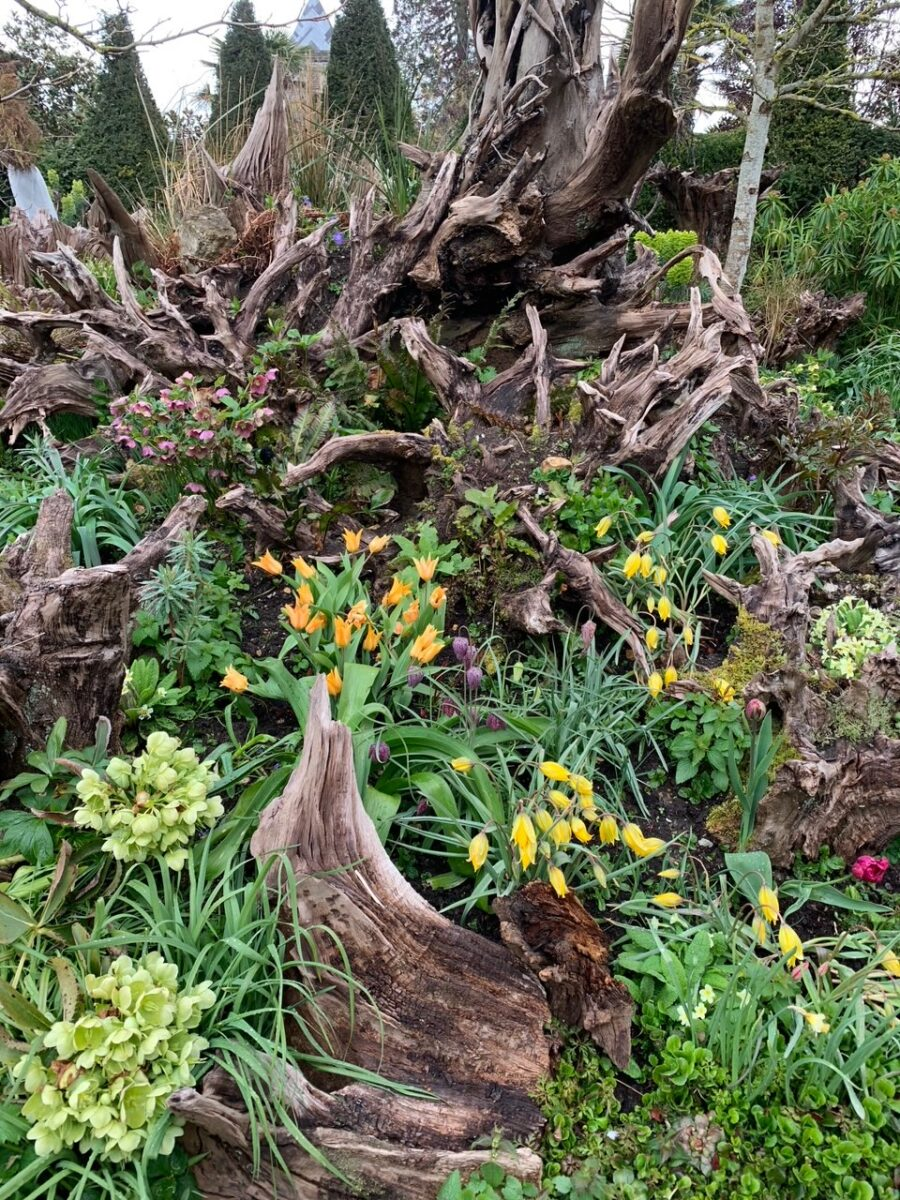 Arundel Castle Gardens stumpery